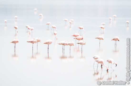 Flamingos, Lake Nakuru National Park, Kenya, light-phenomenon.com, Daniel Haller