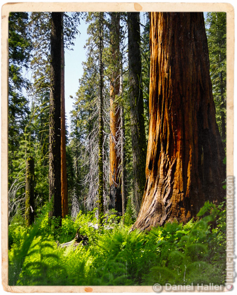 Sequoia National Park - Sony Cyber-shot DSC-P1