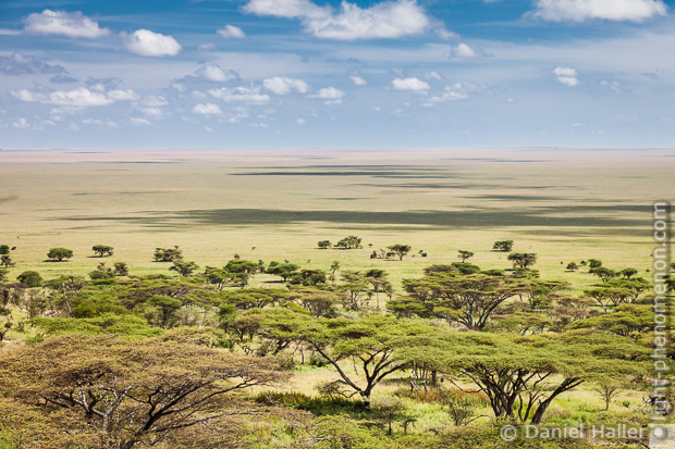 Die unendlichen Weiten der Serengeti