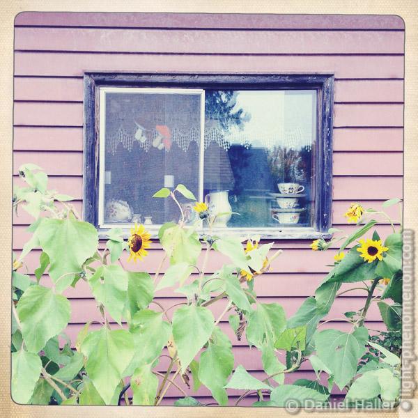 Window-1168