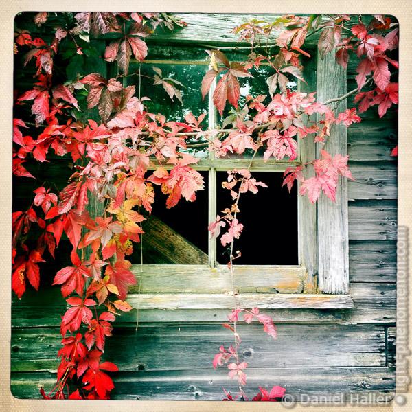 Window-1174