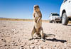 African ground squirrel, Namibia, Southern Africa, Copyright (c) Daniel Haller - light-phenomenon.com. All rights reserved.